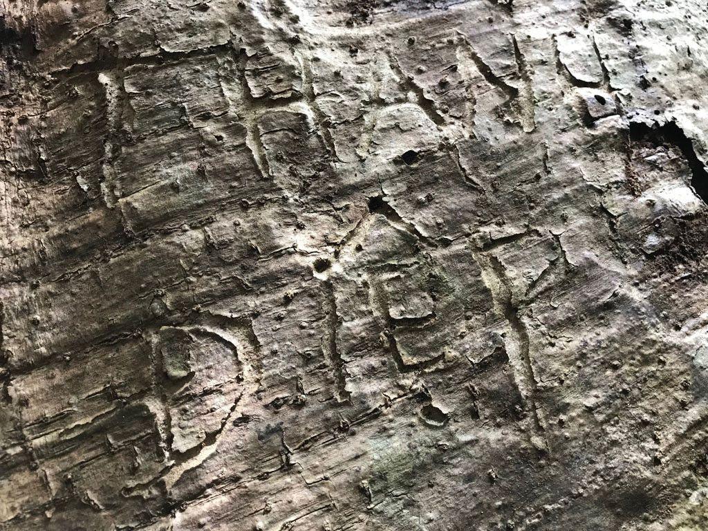 'Cường, Hải, Lan, Điệp' nham nhở trên cây tung ngàn năm ở Vườn quốc gia Cát Tiên Ảnh 13