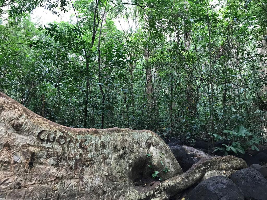 'Cường, Hải, Lan, Điệp' nham nhở trên cây tung ngàn năm ở Vườn quốc gia Cát Tiên Ảnh 1