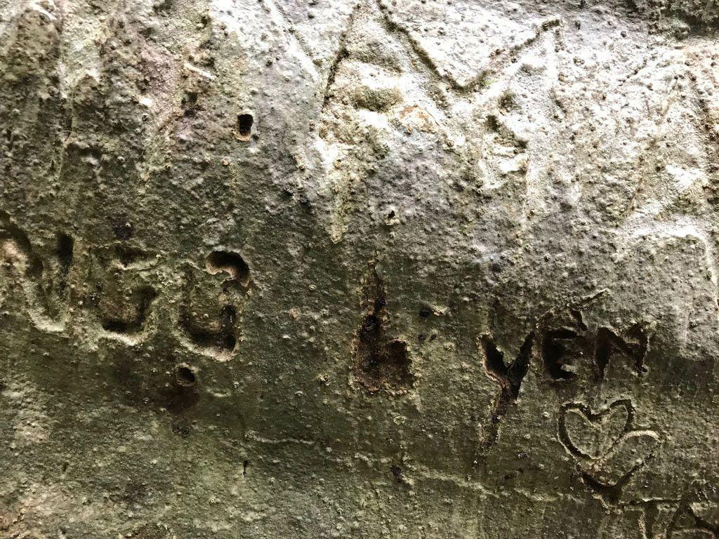 'Cường, Hải, Lan, Điệp' nham nhở trên cây tung ngàn năm ở Vườn quốc gia Cát Tiên Ảnh 10