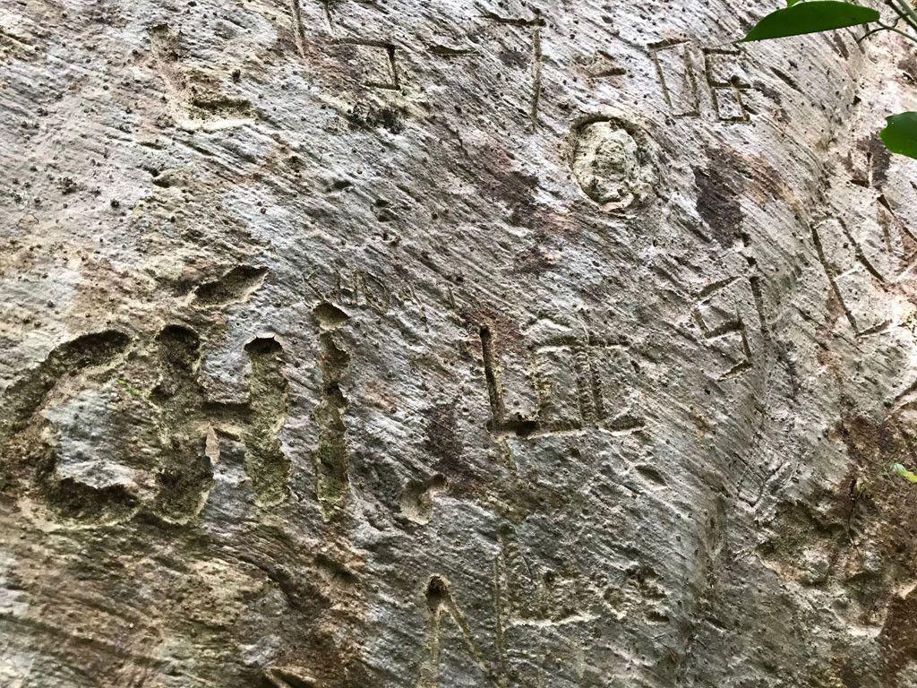 'Cường, Hải, Lan, Điệp' nham nhở trên cây tung ngàn năm ở Vườn quốc gia Cát Tiên Ảnh 15