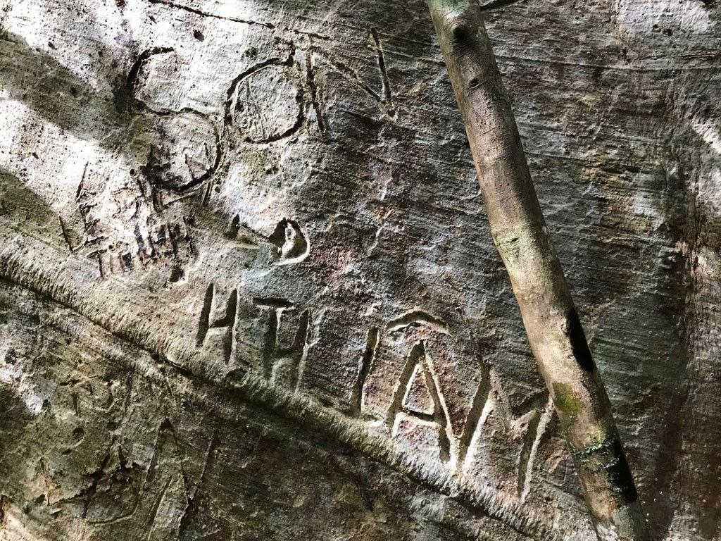 'Cường, Hải, Lan, Điệp' nham nhở trên cây tung ngàn năm ở Vườn quốc gia Cát Tiên Ảnh 11