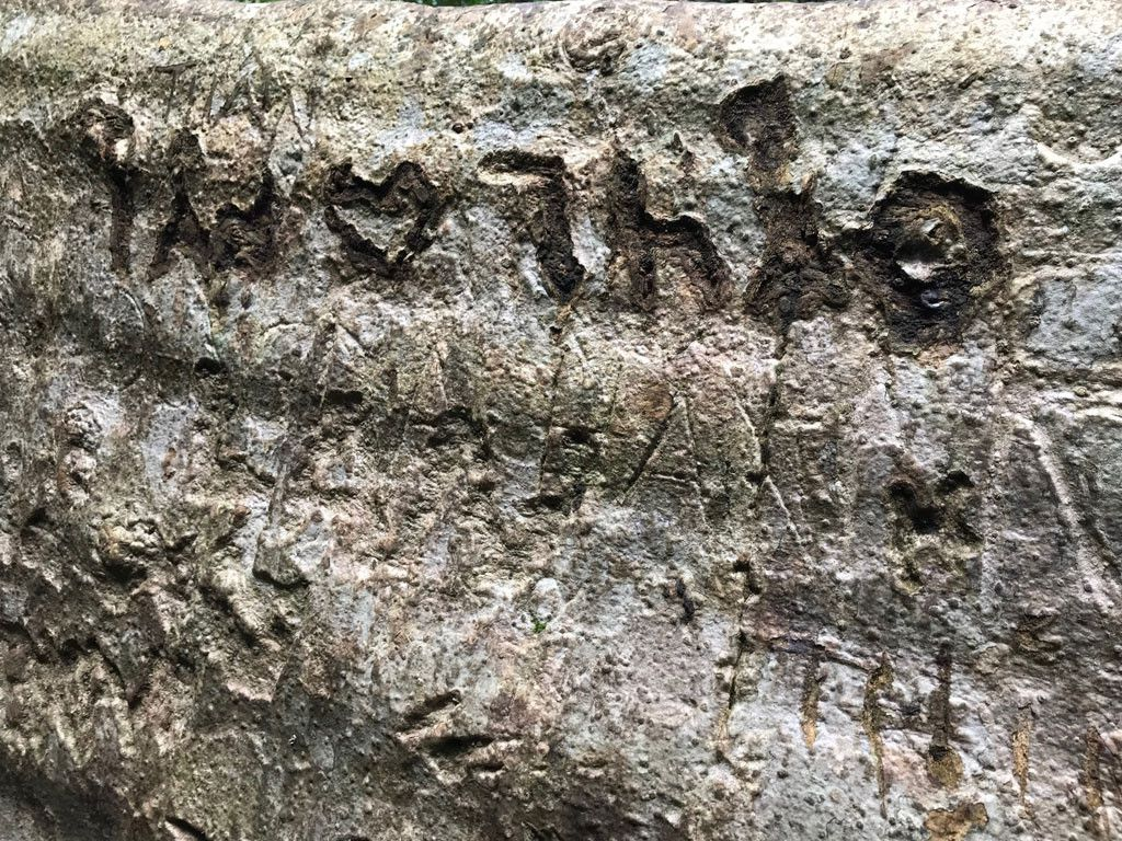 'Cường, Hải, Lan, Điệp' nham nhở trên cây tung ngàn năm ở Vườn quốc gia Cát Tiên Ảnh 7