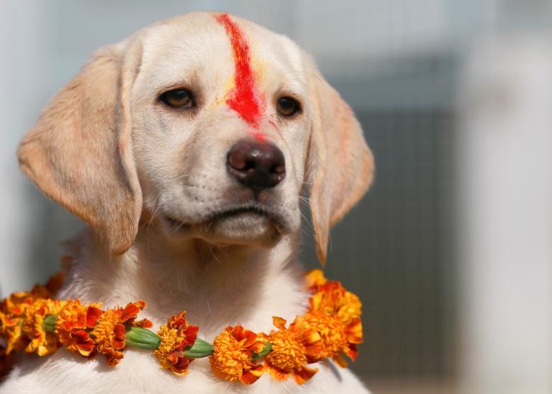 Tưng bừng lễ hội ánh sáng Diwali khắp nơi trên thế giới Ảnh 10