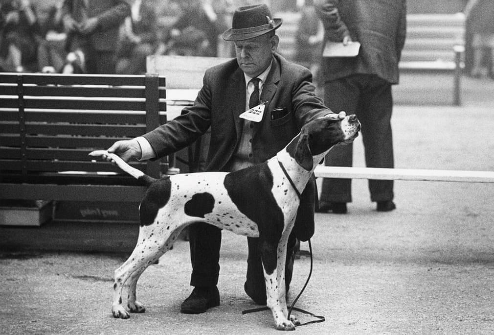Những bức ảnh đen trắng hiếm có về Dog Show ở Anh giữa thế kỷ 20 Ảnh 7