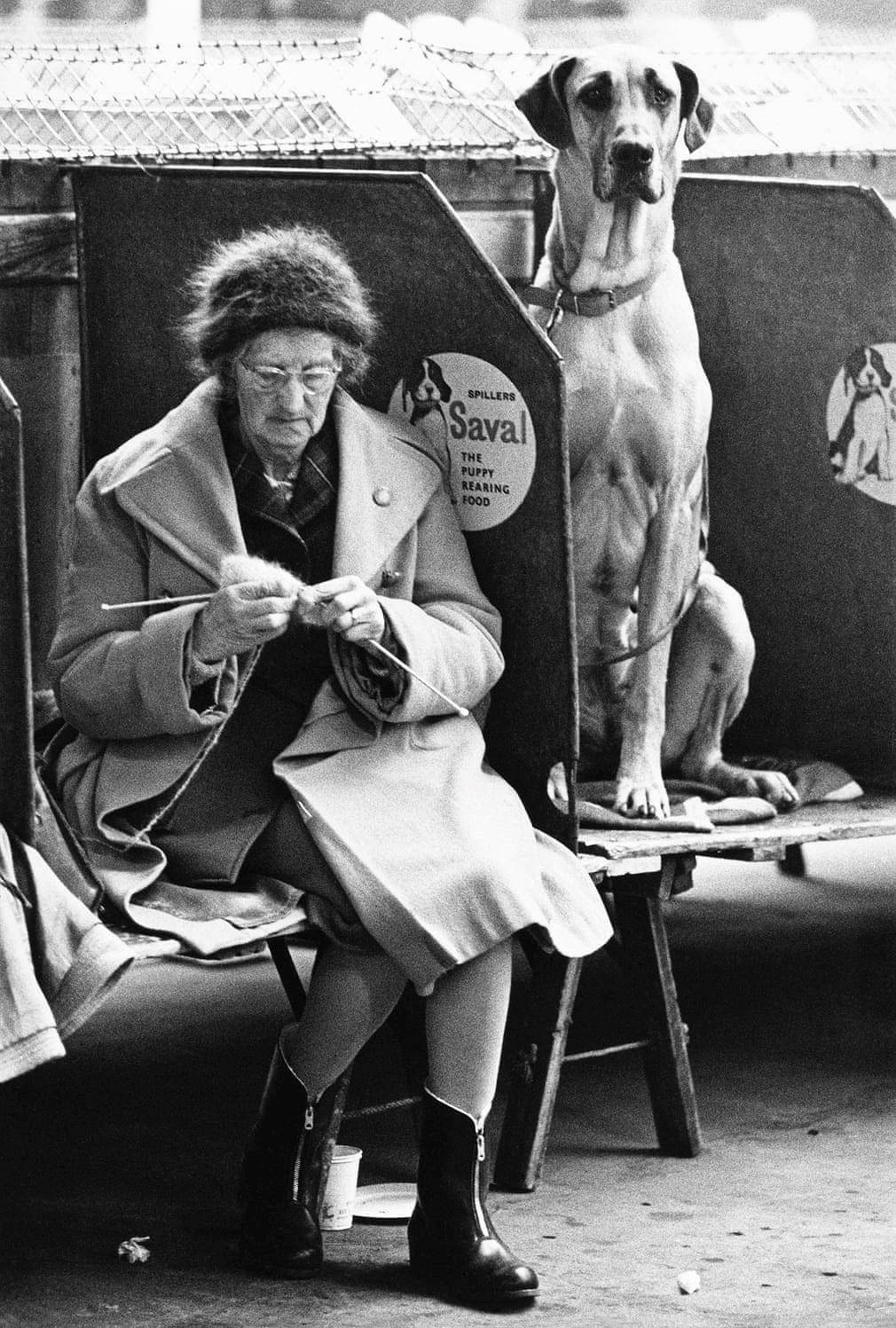 Những bức ảnh đen trắng hiếm có về Dog Show ở Anh giữa thế kỷ 20 Ảnh 4