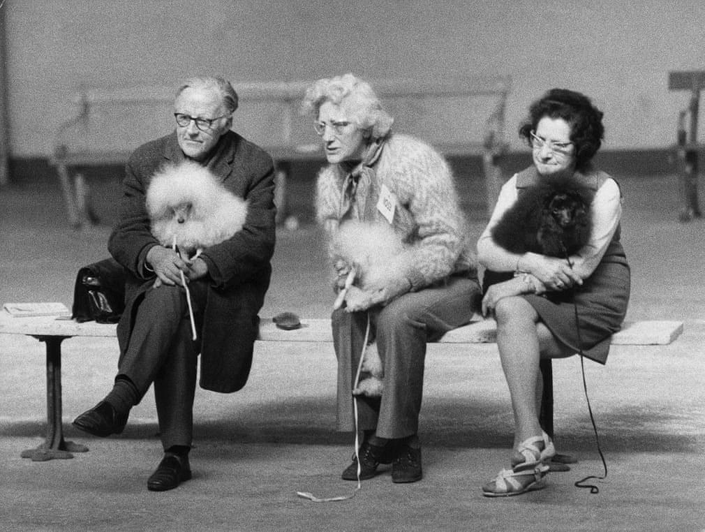 Những bức ảnh đen trắng hiếm có về Dog Show ở Anh giữa thế kỷ 20 Ảnh 2