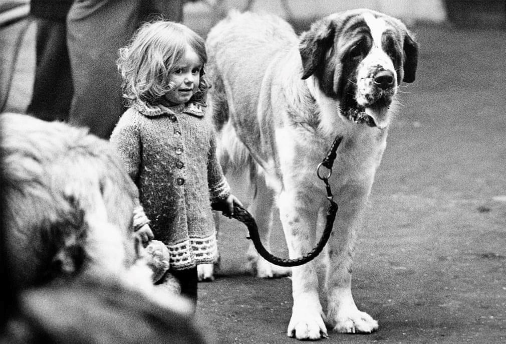 Những bức ảnh đen trắng hiếm có về Dog Show ở Anh giữa thế kỷ 20 Ảnh 1