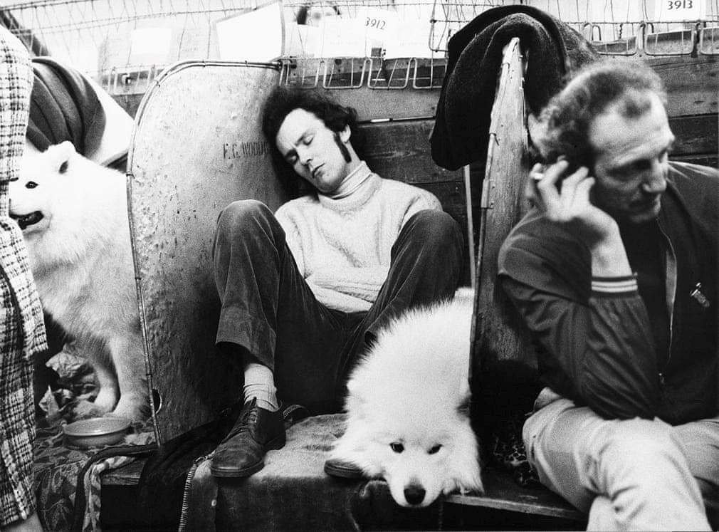Những bức ảnh đen trắng hiếm có về Dog Show ở Anh giữa thế kỷ 20 Ảnh 10