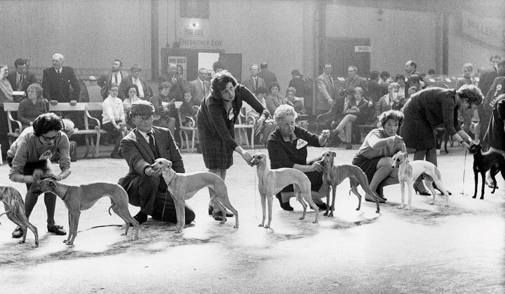 Những bức ảnh đen trắng hiếm có về Dog Show ở Anh giữa thế kỷ 20 Ảnh 6