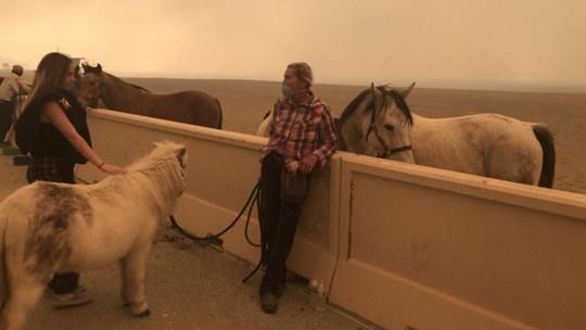Hàng loạt ngôi sao Hollywood sơ tán khẩn cấp vì cháy rừng Ảnh 8