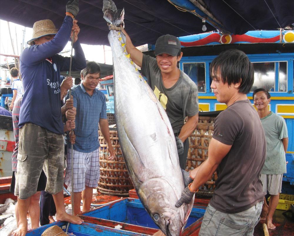 Sau bài báo Lao Động, Bộ NNPTNT gửi công văn hỏa tốc giải cứu doanh nghiệp thủy sản Ảnh 1