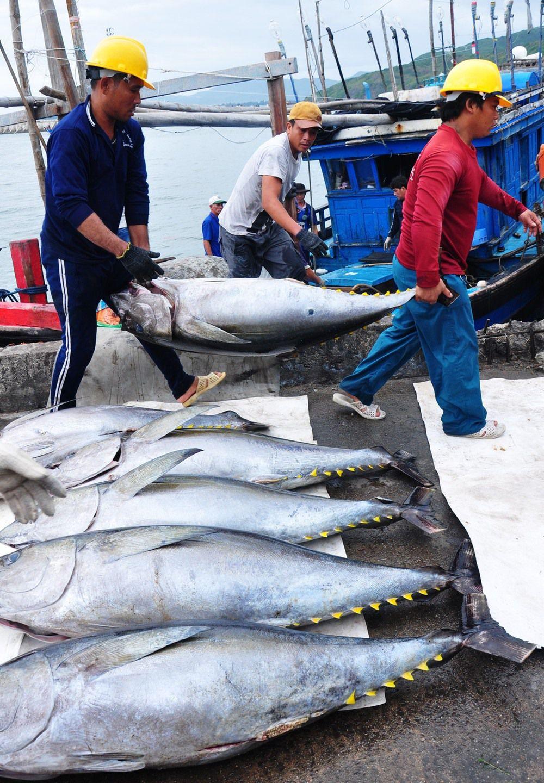 Sau bài báo Lao Động, Bộ NNPTNT gửi công văn hỏa tốc giải cứu doanh nghiệp thủy sản Ảnh 2