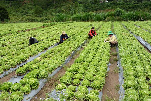 Người Nhật sang VN làm nông rồi xuất lại chính quốc ngày càng nhiều Ảnh 1