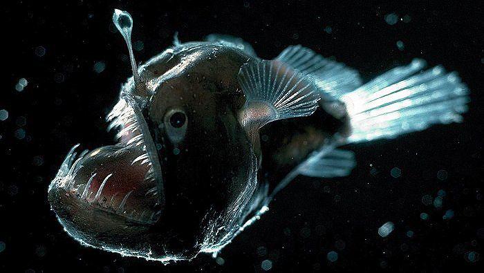 Khe vực Mariana - Nơi sâu nhất đại dương có điều gì huyền bí? Ảnh 2