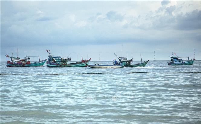 Thả rạn nhân tạo ở Khu bảo tồn biển Phú Quốc ảnh 1