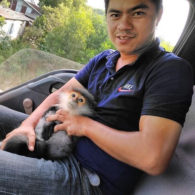 Voọc chà vá trèo vào cao tốc Đà Nẵng-Quảng Ngãi Ảnh 1
