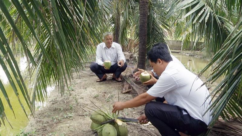 Làm giàu ở nông thôn: Tỷ phú dừa xiêm xanh trên đất nhiễm phèn Ảnh 1
