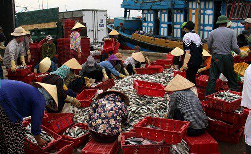 Thanh Hóa:Tăng cường bảo vệ, phát triển nguồn lợi thủy sản Ảnh 3