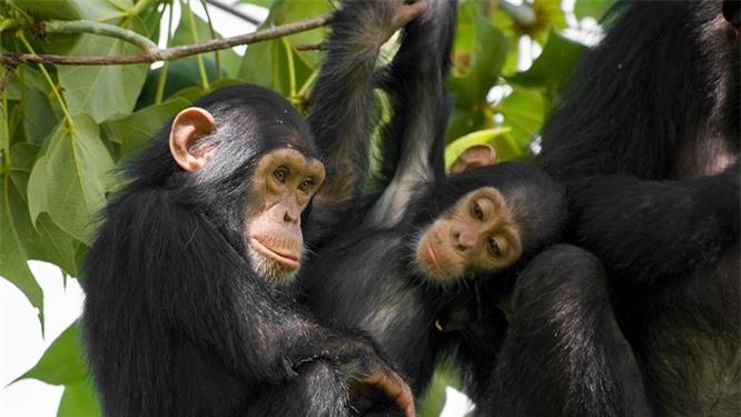 Top 10 loài động vật thông minh nhất trên hành tinh Ảnh 1