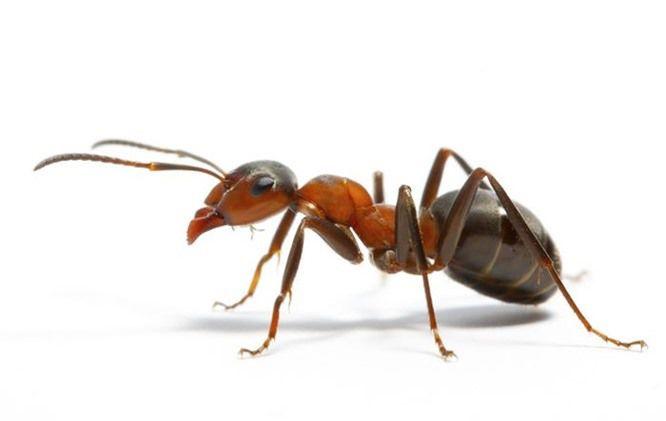 Top 10 loài động vật thông minh nhất trên hành tinh Ảnh 10