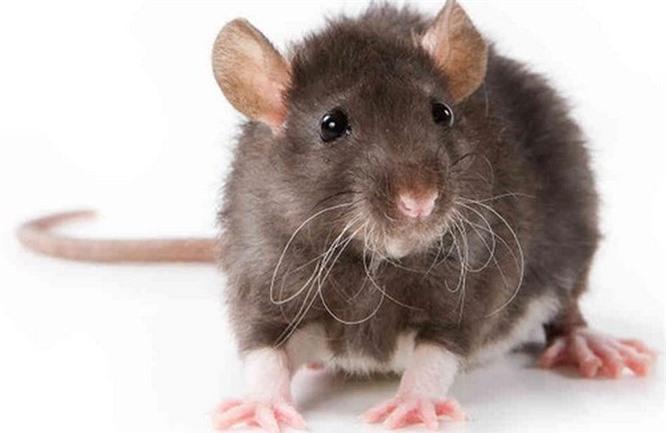 Top 10 loài động vật thông minh nhất trên hành tinh Ảnh 3