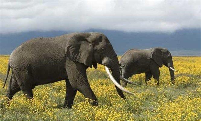 Top 10 loài động vật thông minh nhất trên hành tinh Ảnh 9