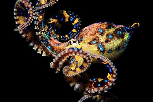 Top 10 loài động vật thông minh nhất trên hành tinh Ảnh 7