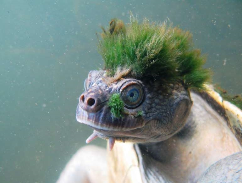 Chùm ảnh: Bất ngờ với những loài động vật kỳ dị nhất hành tinh Ảnh 15