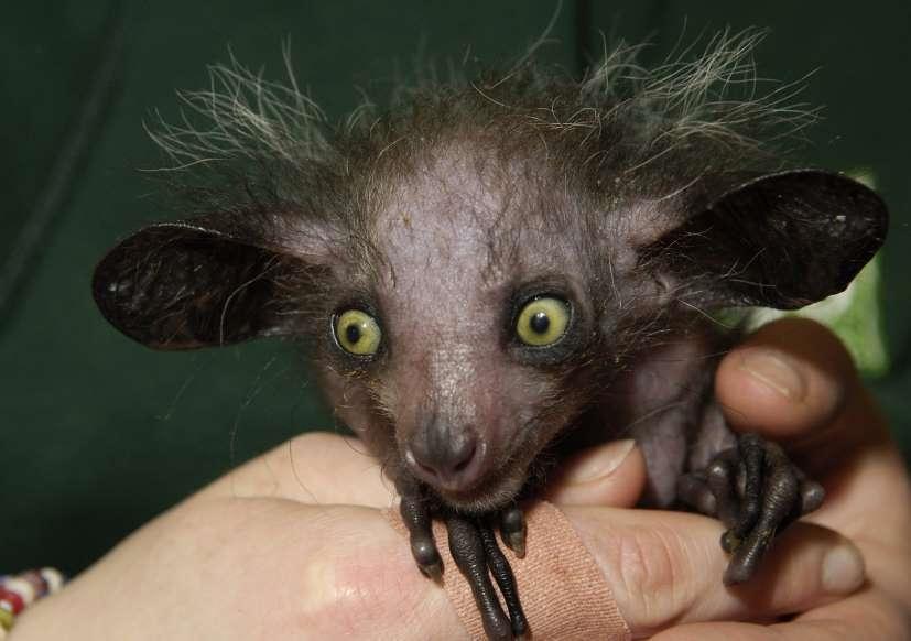 Chùm ảnh: Bất ngờ với những loài động vật kỳ dị nhất hành tinh Ảnh 2