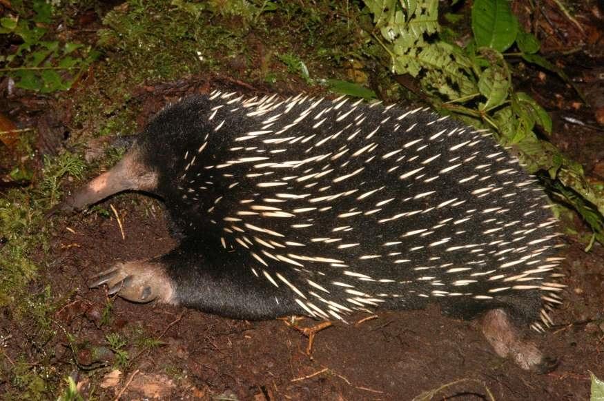 Chùm ảnh: Bất ngờ với những loài động vật kỳ dị nhất hành tinh Ảnh 4