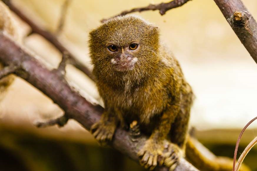 Chùm ảnh: Bất ngờ với những loài động vật kỳ dị nhất hành tinh Ảnh 9