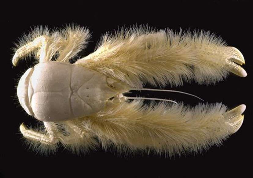 Chùm ảnh: Bất ngờ với những loài động vật kỳ dị nhất hành tinh Ảnh 5