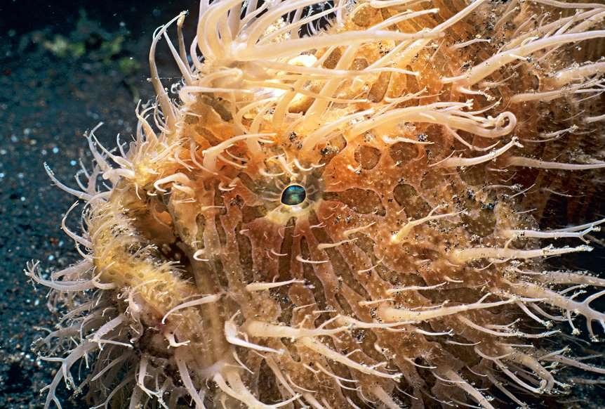 Chùm ảnh: Bất ngờ với những loài động vật kỳ dị nhất hành tinh Ảnh 13