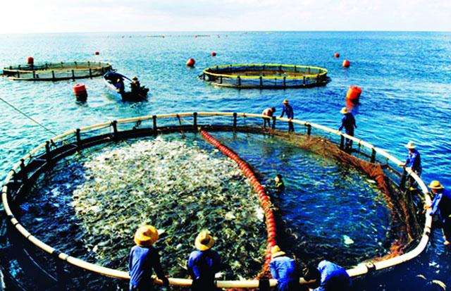 Xây dựng cơ sở dữ liệu quốc gia về thủy sản Ảnh 1