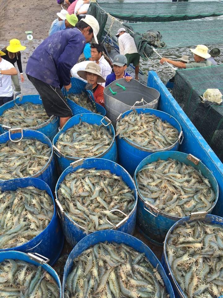 Công ty Thăng Long tăng giá thức ăn 'thần tốc', hàng vạn nông dân nuôi tôm điêu đứng Ảnh 5