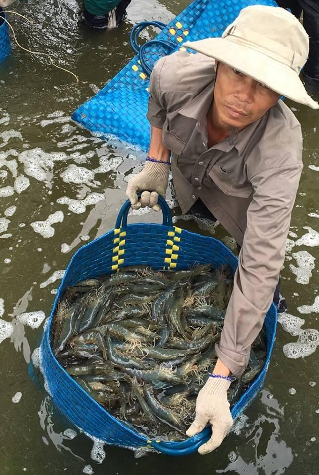Công ty Thăng Long tăng giá thức ăn 'thần tốc', hàng vạn nông dân nuôi tôm điêu đứng Ảnh 1
