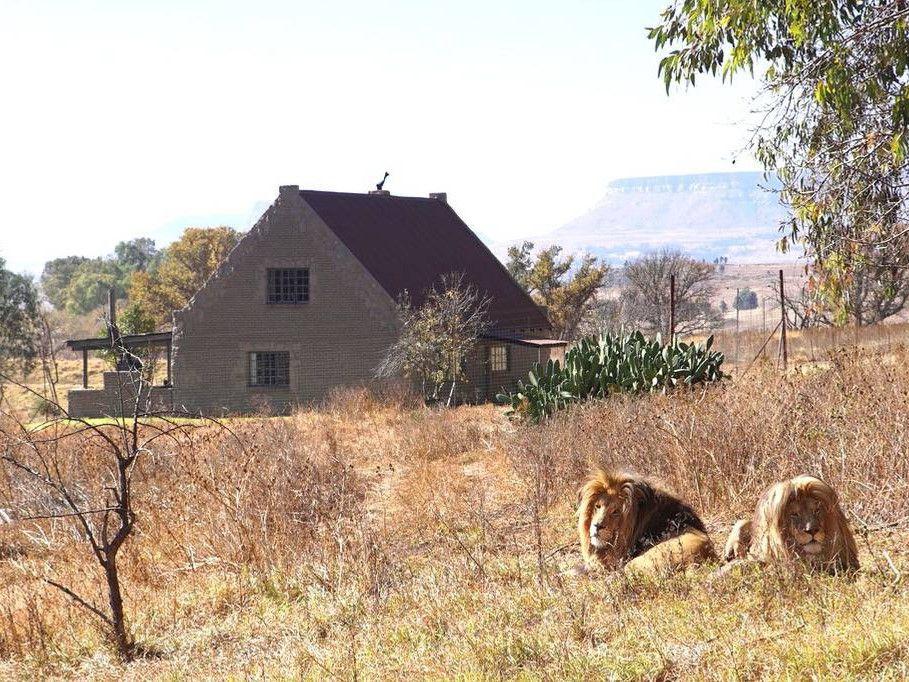 Du khách chi cả trăm USD một đêm để ngủ giữa 77 con sư tử Ảnh 1