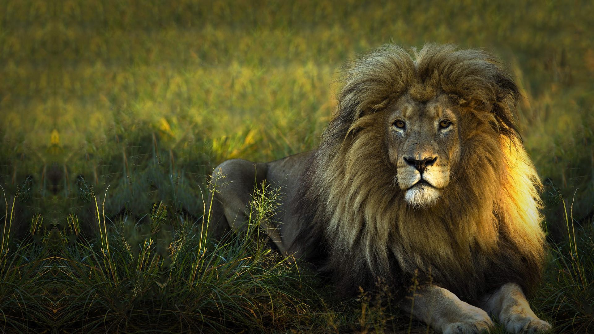 Du khách chi cả trăm USD một đêm để ngủ giữa 77 con sư tử Ảnh 11