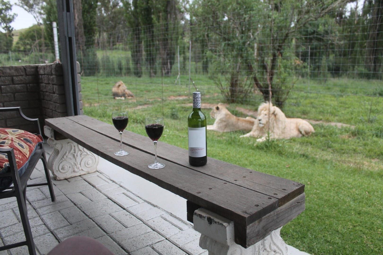 Du khách chi cả trăm USD một đêm để ngủ giữa 77 con sư tử Ảnh 4