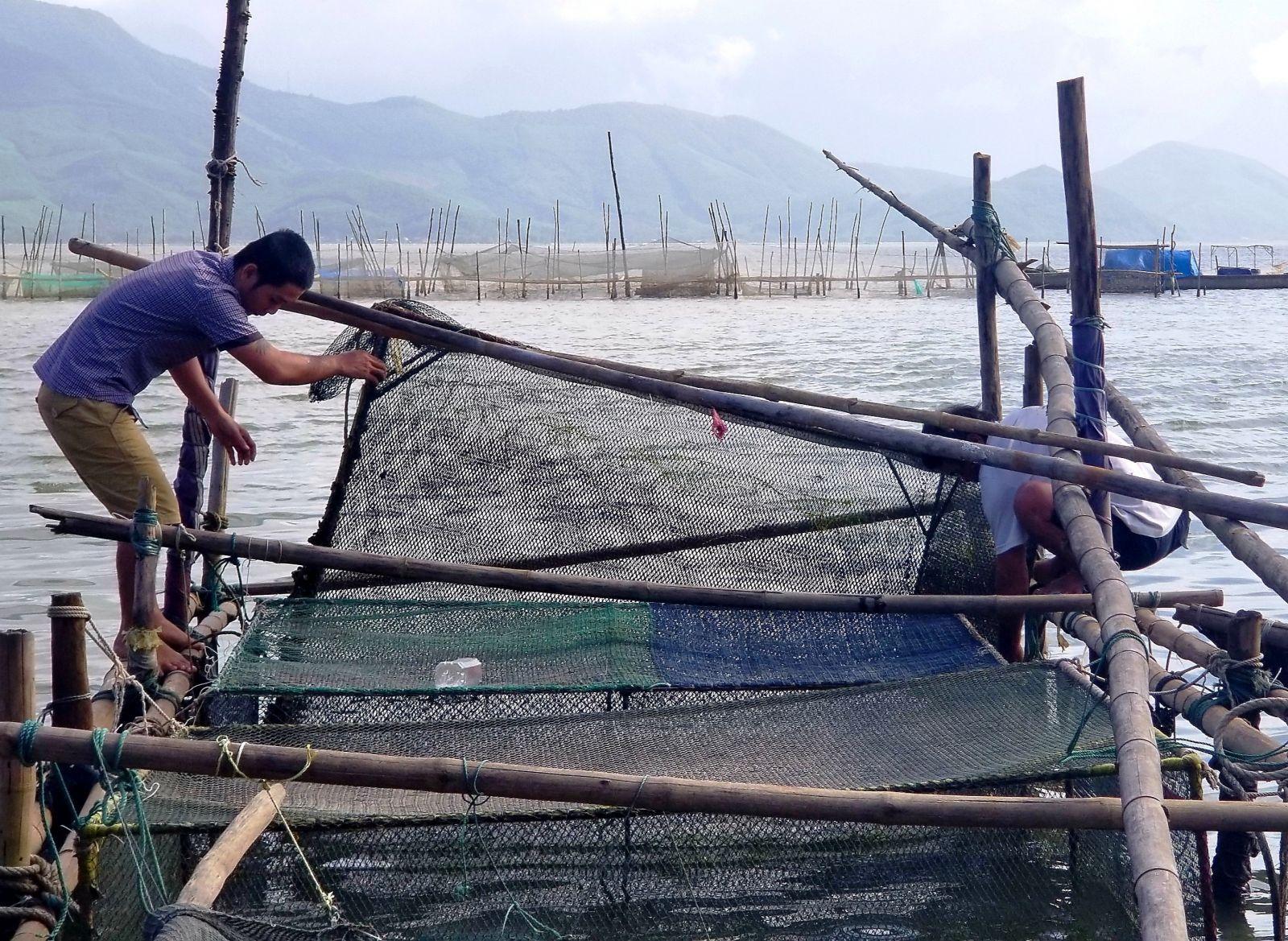 Dân ở đây ăn Tết to nhờ nuôi cá mú, cá vẩu, bán 300 ngàn/ký Ảnh 1