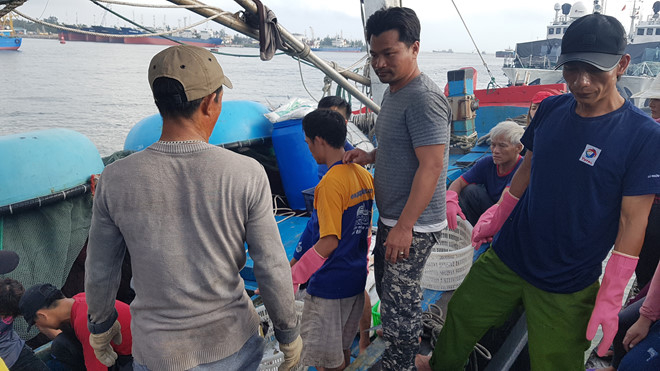Ngư dân kể chuyện đánh trúng mẻ cá 'khủng' 120 tấn Ảnh 3