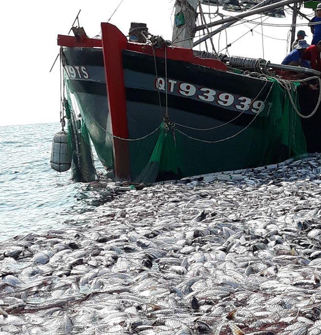 Ngư dân kể chuyện đánh trúng mẻ cá 'khủng' 120 tấn Ảnh 4
