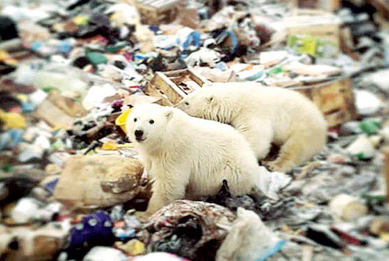 Gấu trắng xâm nhập khu dân cư Ảnh 1