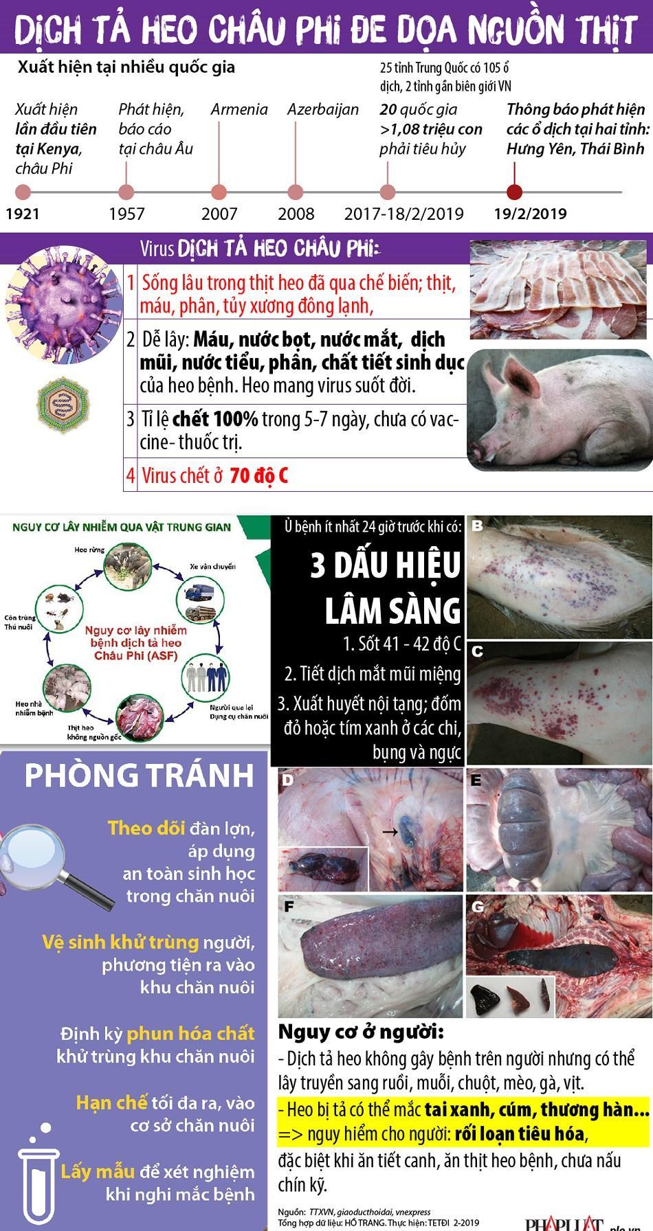 Dịch tả heo Châu Phi đe dọa nguồn thịt heo Việt Ảnh 1