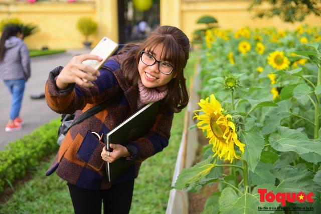 Cánh đồng hoa hướng dương 2.000m2 nở rộ tại Hoàng thành Thăng Long Ảnh 11