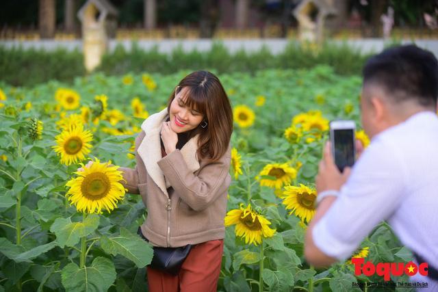 Cánh đồng hoa hướng dương 2.000m2 nở rộ tại Hoàng thành Thăng Long Ảnh 6