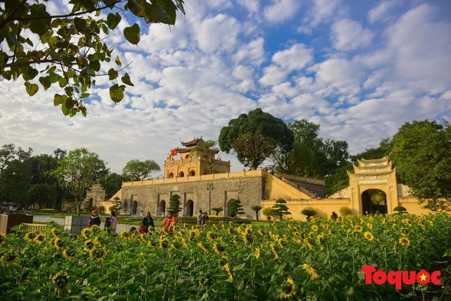 Cánh đồng hoa hướng dương 2.000m2 nở rộ tại Hoàng thành Thăng Long Ảnh 8