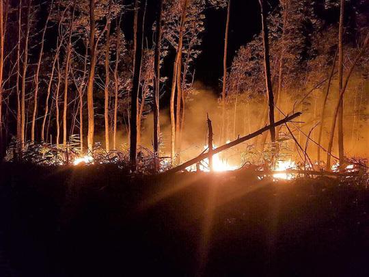 Bất cẩn khi đốt rẫy làm thiêu rụi 5 ha rừng Ảnh 1