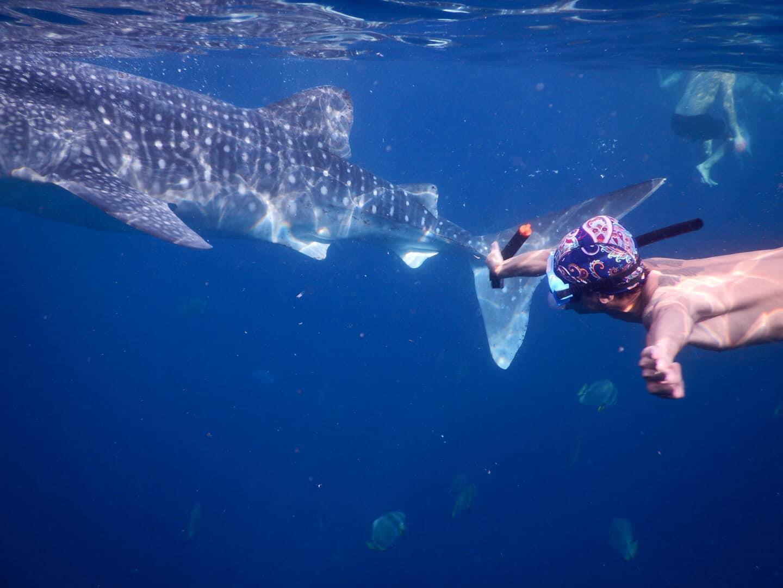 Lưng trần, lặn biển ngắm cá mập voi dài 5 m ở Philippines Ảnh 4