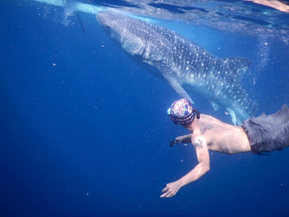 Lưng trần, lặn biển ngắm cá mập voi dài 5 m ở Philippines Ảnh 6